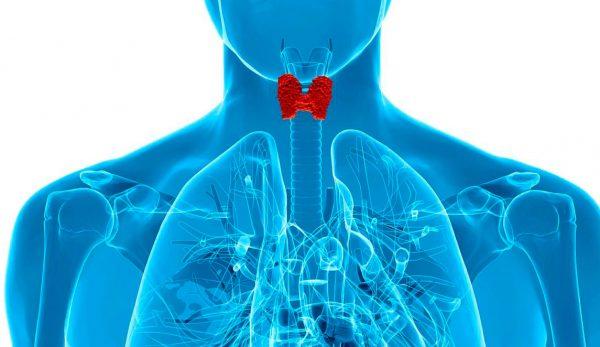 Применение Пеноксал<sup>®</sup> forte вэндокринологии